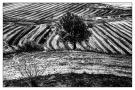 Campi_bruciati._Crotone_2014_di_Domenico_Perpiglia_2.jpg
